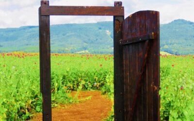 Advocaten for freedom: de deur van de gevangenis staat open